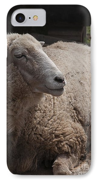 Ewe IPhone Case by Terry Rowe