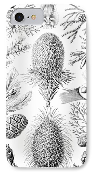 Examples Of Coniferae From Kunstformen IPhone Case by Ernst Haeckel
