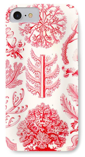 Examples Of Florideae From Kunstformen Der Natur Phone Case by Ernst Haeckel