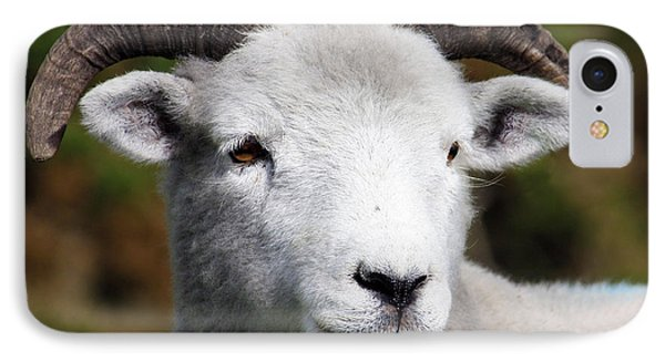 Exmoor Horn Sheep Phone Case by Terri Waters