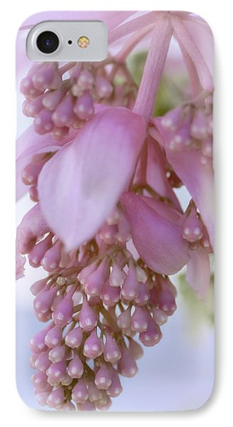 Exotic Malaysian Orchid IPhone Case by Julie Palencia