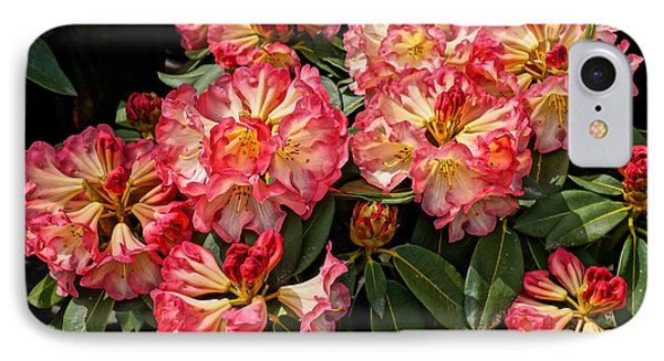 Exploding Rhodies IPhone Case by Ronda Broatch