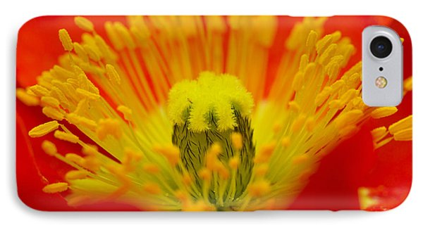 Explosion Of Colour Phone Case by Carole Lloyd
