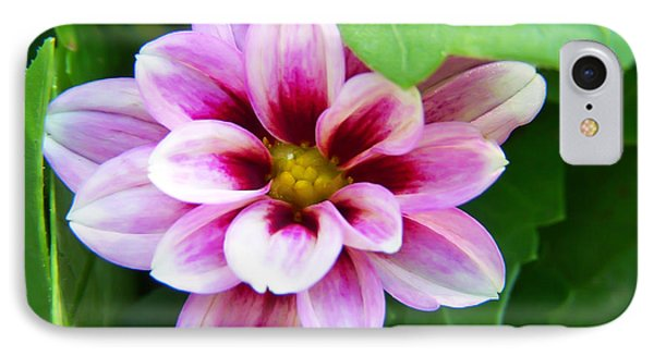 Exquisite Phone Case by Aimee L Maher Photography and Art Visit ALMGallerydotcom
