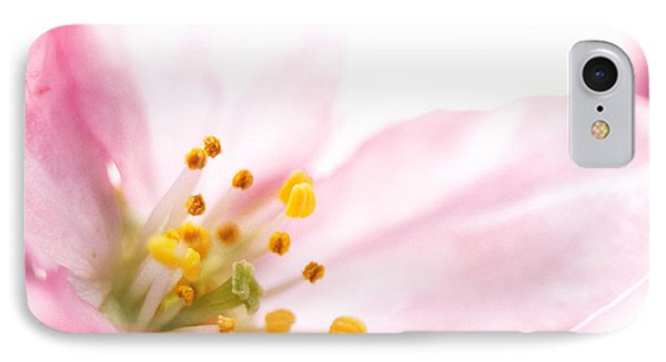 Extreme Close Up Of Cherry Blossom IPhone Case by Panoramic Images