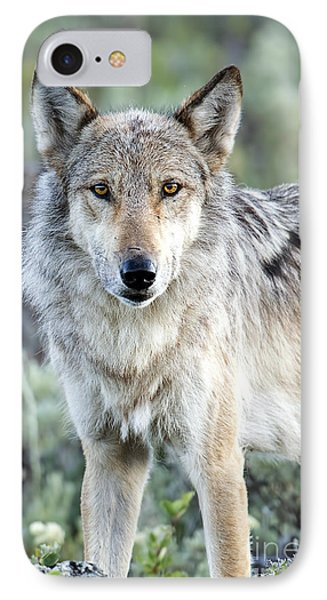 Eye Contact With A Gray Wolf IPhone Case