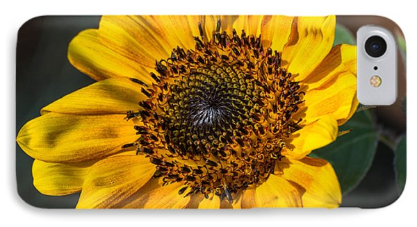 Eye Of The Sun Phone Case by Michael Moriarty