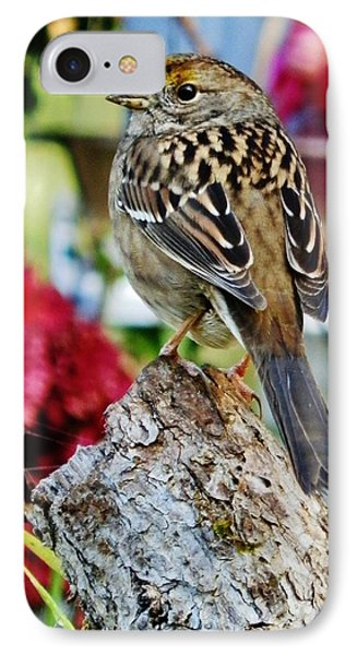 IPhone Case featuring the photograph Eyeing The Sparrow by VLee Watson