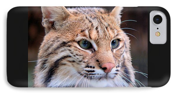 Eyes Of A Lynx IPhone Case by Rosalie Scanlon