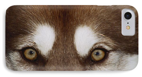 Eyes Of A Red Siberian Husky IPhone Case by Carolyn McKeone