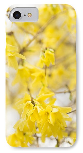 Fabulous Forsythia IPhone Case by Anne Gilbert