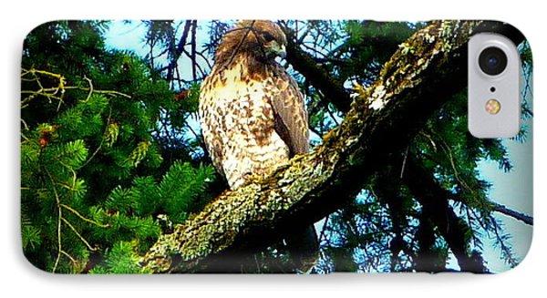 Falcon High Phone Case by Susan Garren