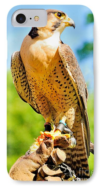IPhone Case featuring the photograph Falcon by Nigel Fletcher-Jones