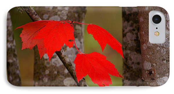 Fall Aflame Phone Case by Ronda Broatch