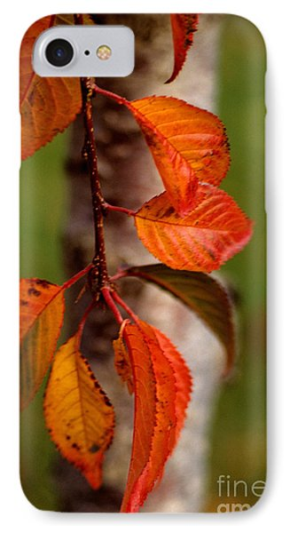 Fall Beauty Phone Case by Sharon Elliott