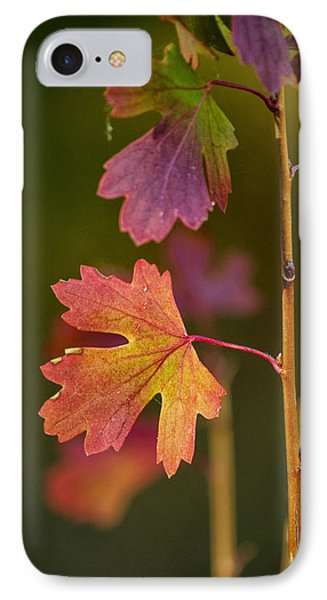 IPhone Case featuring the photograph Fall Branch by Janis Knight