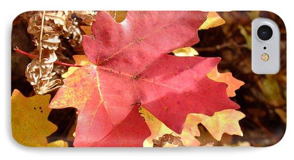 Fall Colors 6313 IPhone Case by En-Chuen Soo