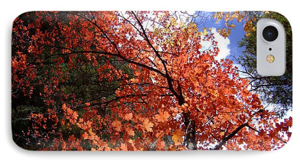 Fall Colors 6340 IPhone Case by En-Chuen Soo