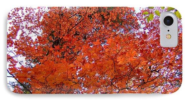 Fall Colors 6359 IPhone Case by En-Chuen Soo