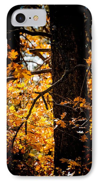 Fall Colors IPhone Case by Mickey Clausen
