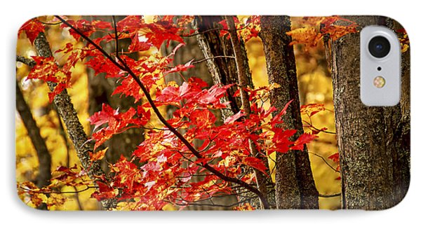 Fall Forest Detail IPhone Case