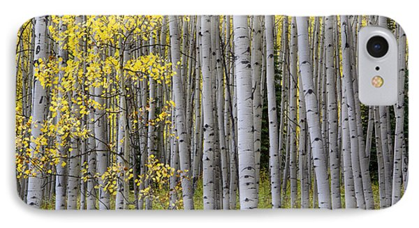 Fall Forest IPhone Case by The Forests Edge Photography - Diane Sandoval