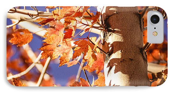 Fall Forever IPhone Case by Gloria Pasko