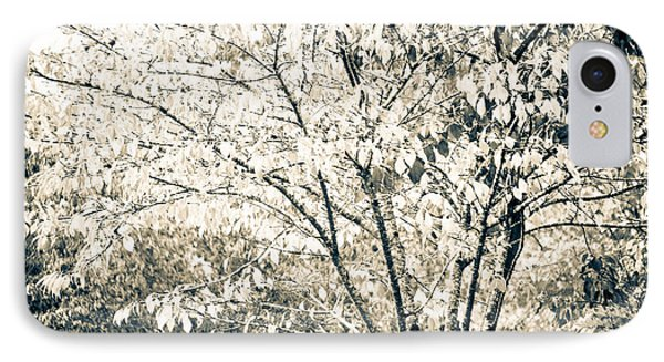 Fall In Black And White Phone Case by Ronda Broatch