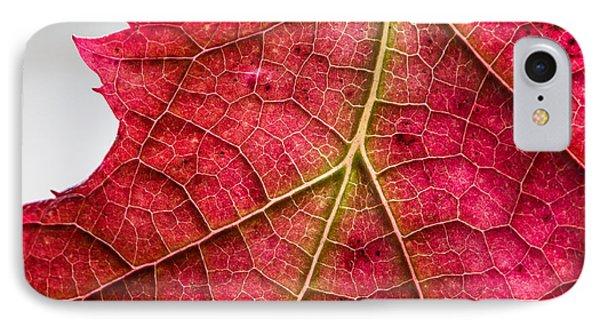 Fall Leaf IPhone Case
