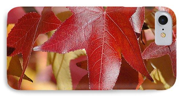 Fall Leaves I IPhone Case