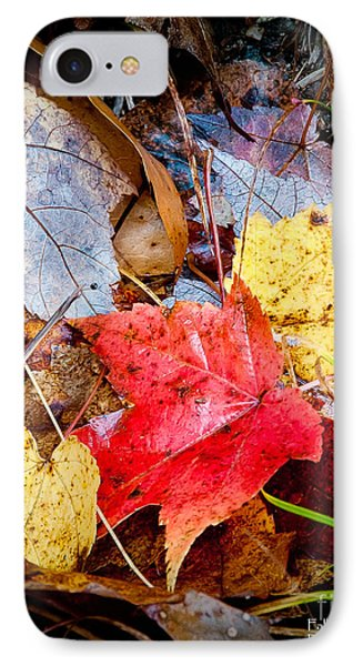 IPhone Case featuring the photograph Fall Leaves In The Rain by David Perry Lawrence