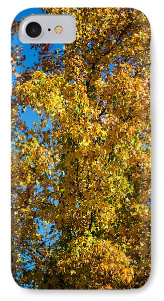 Fall Leaves Phone Case by Mike Lee