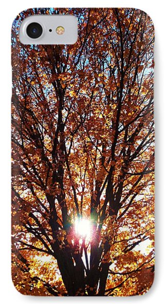 Fall Light IPhone Case by Darren Robinson