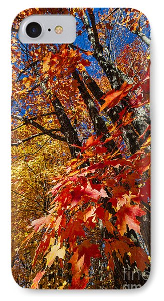 Fall Maple Forest Phone Case by Elena Elisseeva