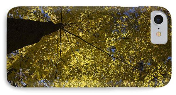 Fall Maple Phone Case by Steven Ralser