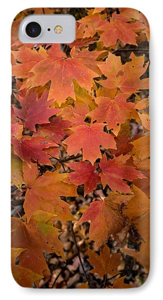 IPhone Case featuring the photograph Fall Maples - 03 by Wayne Meyer
