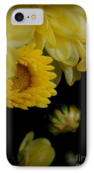 Fall Mums Growing At Blue Horse Rescue IPhone Case