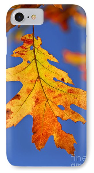 Fall Oak Leaf IPhone Case by Elena Elisseeva