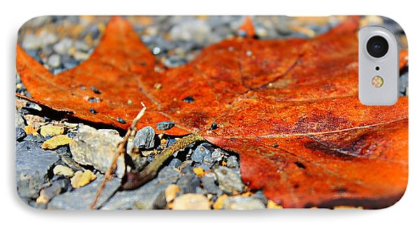 Fall Road IPhone Case by Candice Trimble