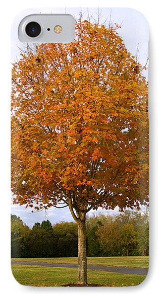 Fall Sugar Maple IPhone Case by Melinda Fawver