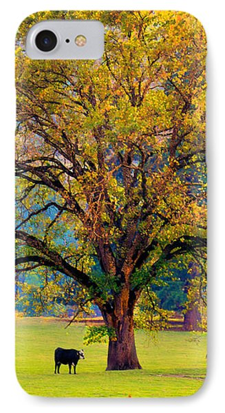 Fall Tree With Two Cows IPhone Case
