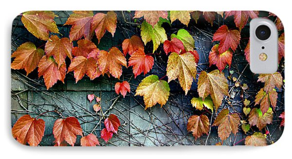 Fall Wall IPhone Case by Kjirsten Collier