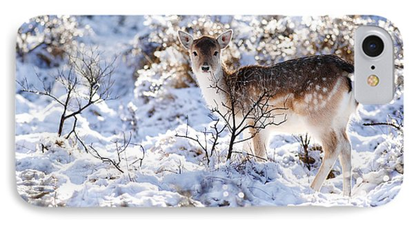 Fallow Deer In Winter Wonderland IPhone Case by Roeselien Raimond