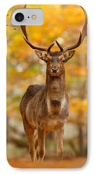 Fallow Deer In Autumn Forest IPhone Case by Roeselien Raimond