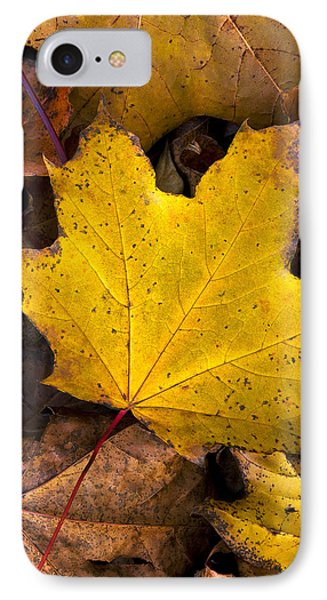 Fall's Gold IPhone Case