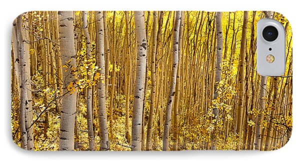Fall's Golden Light IPhone Case by Steven Reed