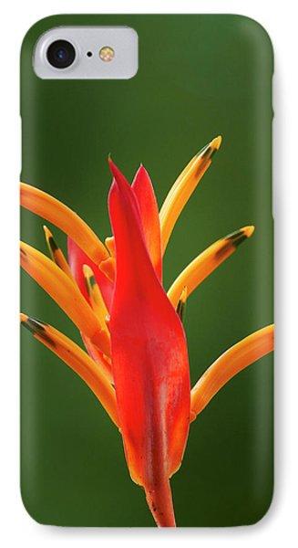 False Bird-of-paradise Flower IPhone Case by David Wall