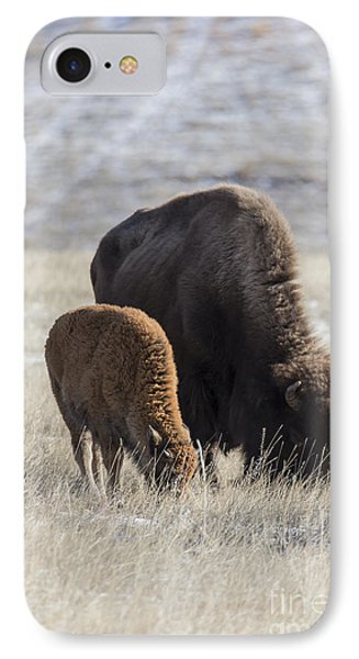 Bison Calf Having A Meal With Its Mother IPhone Case