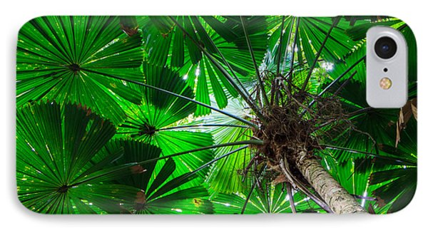 Fan Palm Tree Of The Rainforest IPhone Case by Peta Thames