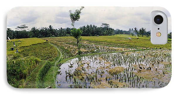 Farmers Working In A Rice Field, Bali IPhone Case by Panoramic Images
